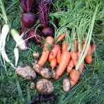 carrots, beetroot, spuds
